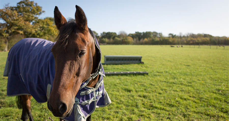 Suffolk – a horsey paradise that's hot to trot!